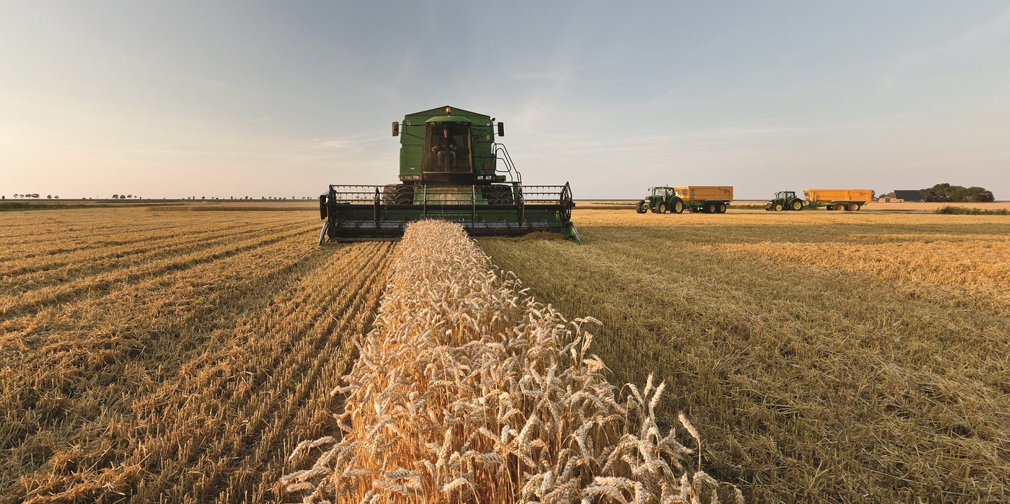 Green Combine harvesting small path of wheat